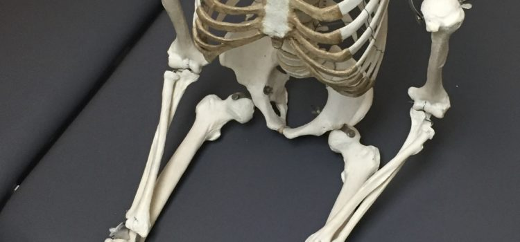 Skeleton sits on table